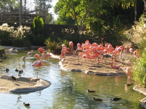 The Flamingos at the San Diego Zoo 2004-09-24